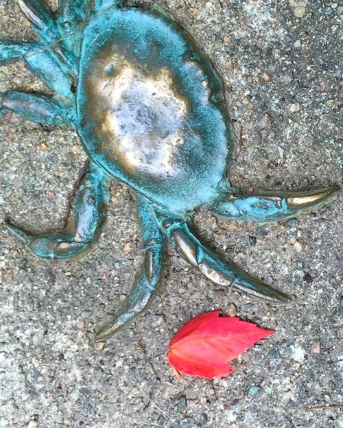 IMG_3163 - Version 22015-07-25-red-leaf-crab-Morison-Mall0© 2014 Penny Cherubino
