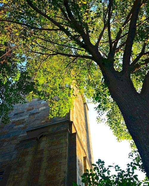 CHE_8749 - Version 42015-09-01-church-court-tower-morning-sun-© 2014 Penny Cherubino