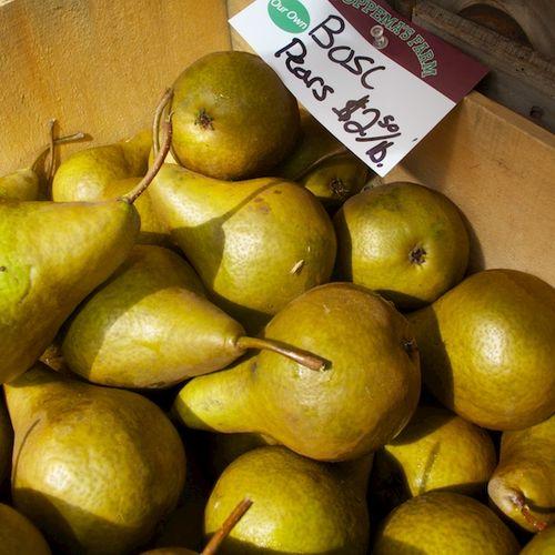 IMG_8548 - Version 22015-09-22-bosc-pears-foppama-farm© 2014 Penny Cherubino