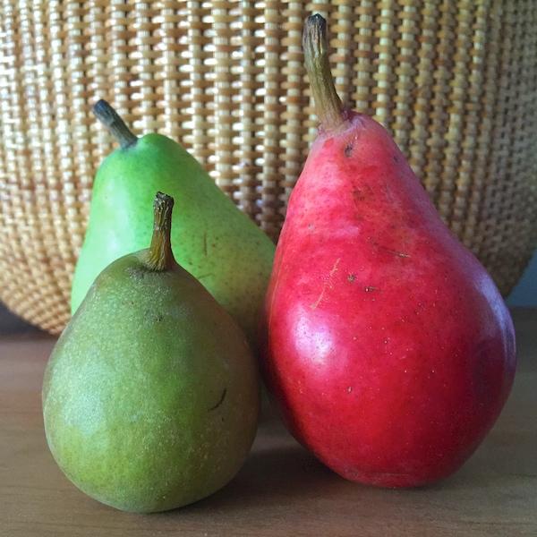 IMG_3792 3 pears - Version 22015-09-19pears-forelle-anjou-bartlett© 2014 Penny Cherubino