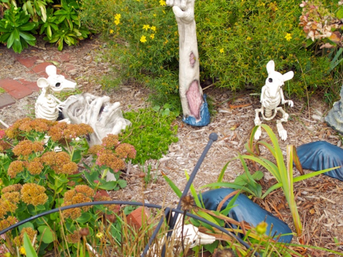 IMG_8639 - Version 22015-10-05halloween-provincetown-rats-grave-© 2014 Penny Cherubino