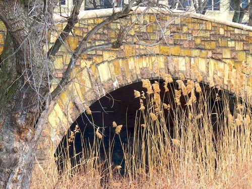 IMG_9234 - Version 22016-02-15fenway-muddy-river-sone-bridge-reeds-© 2014 Penny Cherubino (1)